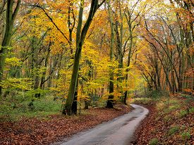 Autumn Country Track England UK