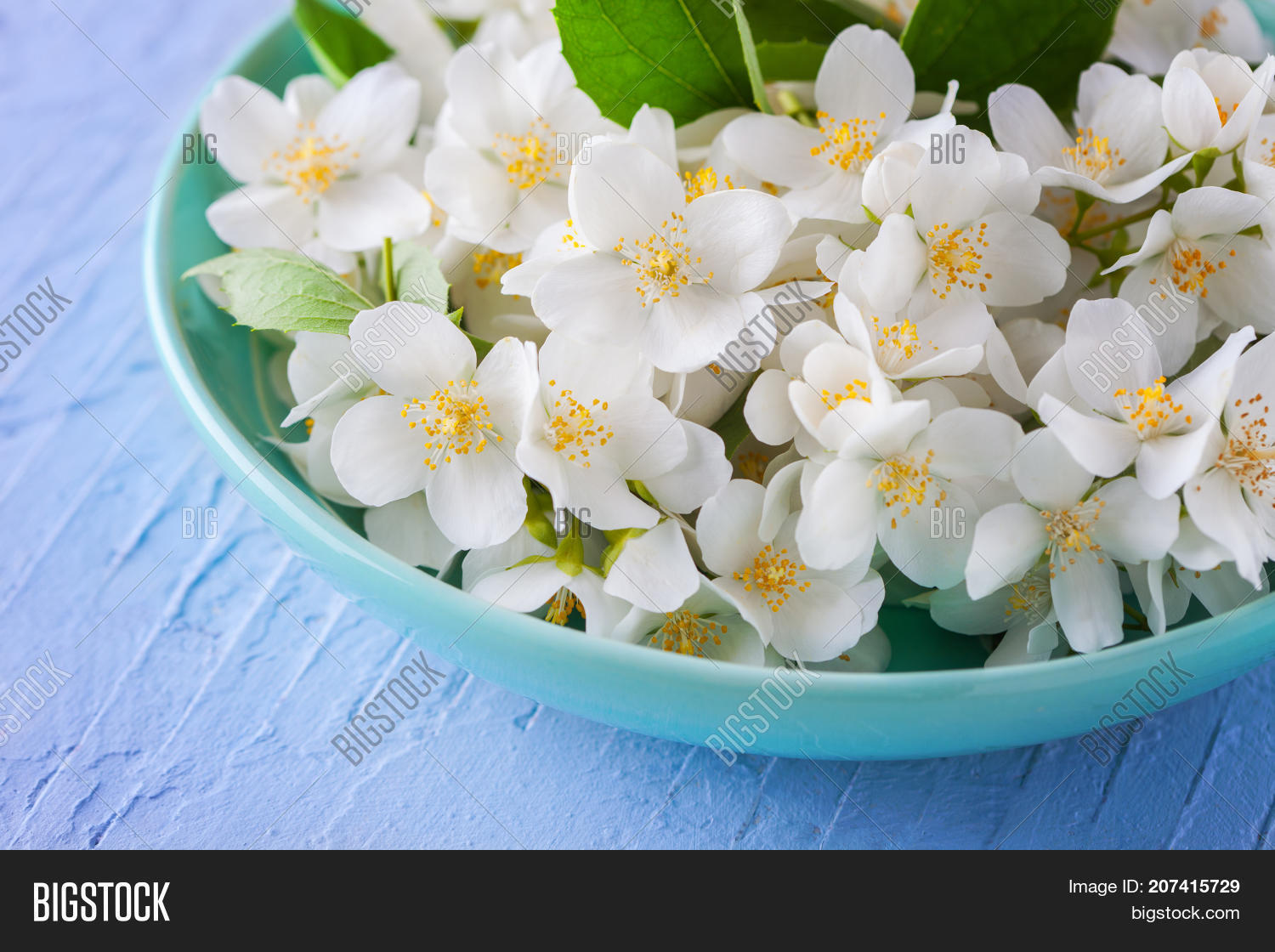 Lots Jasmine Flowers Image Photo Free Trial Bigstock