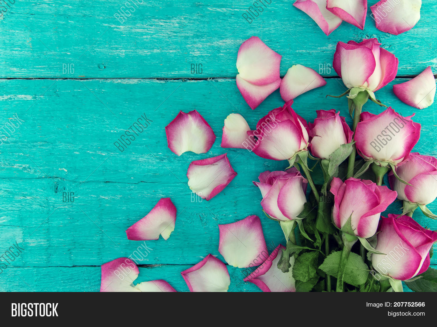 Frame Pink Roses On Image Photo Free Trial Bigstock