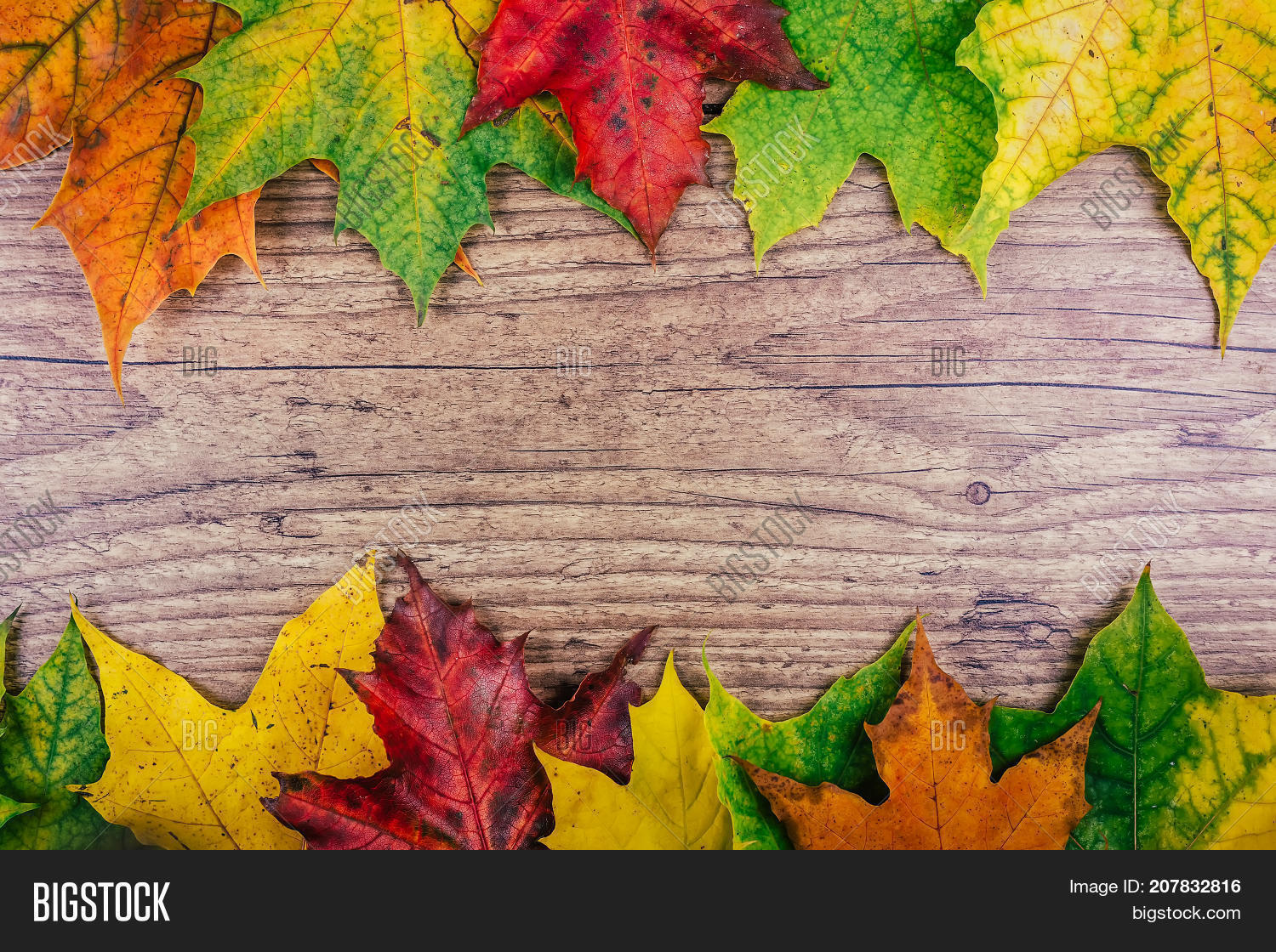 Autumn Background With Colorful Fall Maple Leaves On Rustic Wooden Table