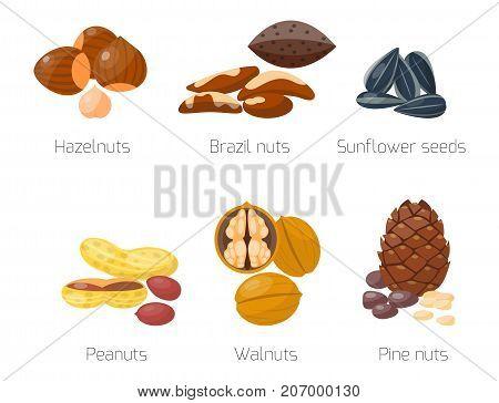 Piles of different nuts hazelnut almond peanut walnut sunflower and brazil tasty seed vector illustration. Organic collection nutshell group assortment vegetarian nutrition.