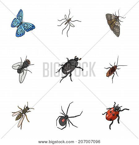 Beetle, wasp, bee, ant, fly, spider, mosquito and other insect species. Various insects set collection icons in cartoon style vector symbol stock isometric illustration .