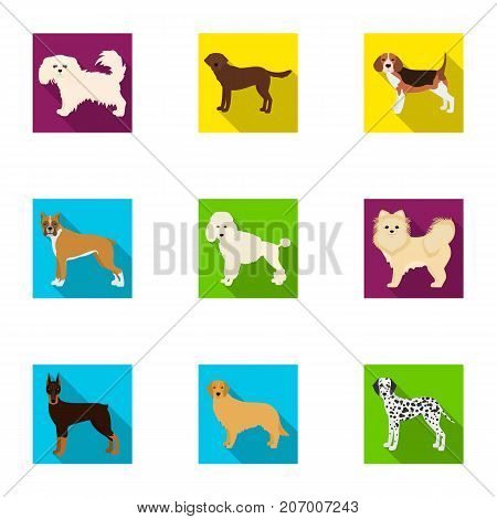 Dachshund, laika, poodle and other  icon in flat style.Boxer, rottweiler, bulldog, icons in set collection