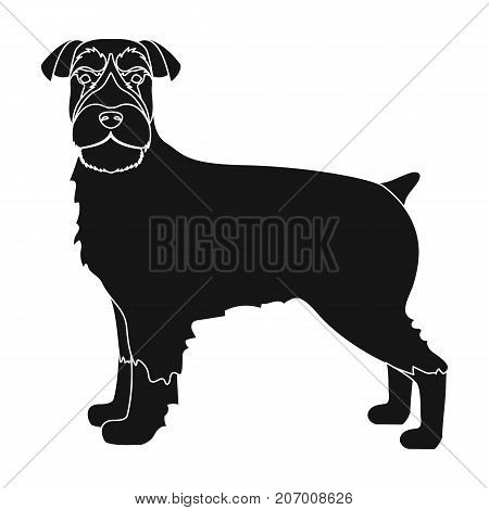Terrier, single icon in black style.Dog, vector symbol stock illustration .