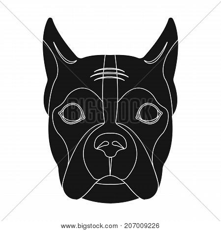 A dog, a breed of boxer.Muzzle of a boxer single icon in black style vector symbol stock illustration .