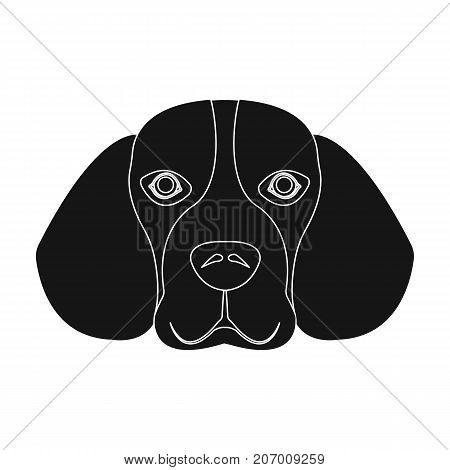 Breed dog beagle..Muzzle beagle single icon in black style vector symbol stock illustration .