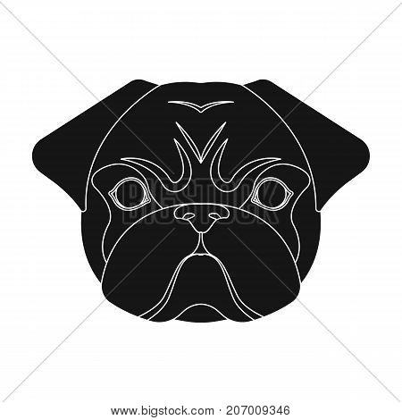 Breed of a dog, a pug.Pug's muzzle single icon in black style vector symbol stock illustration .