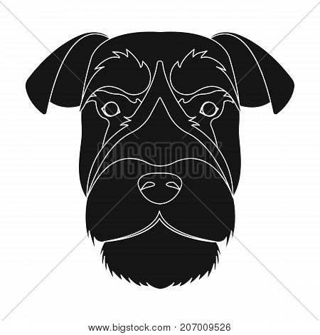 A breed of a dog, a risen schnauzer.Risen Schnauzer Muzzle single icon in black style vector symbol stock illustration .