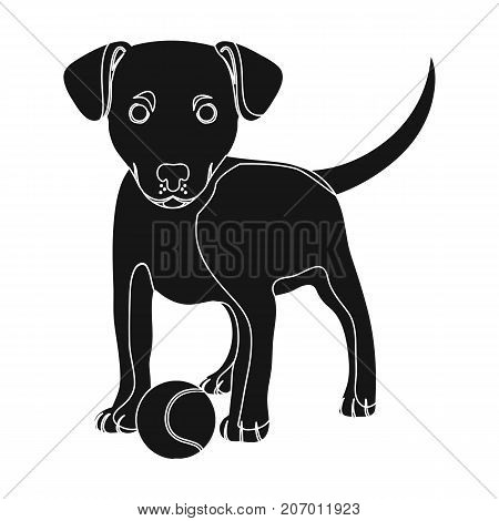 Pet, puppy dog with a ball. Pet, dog care single icon in black style vector symbol stock illustration .