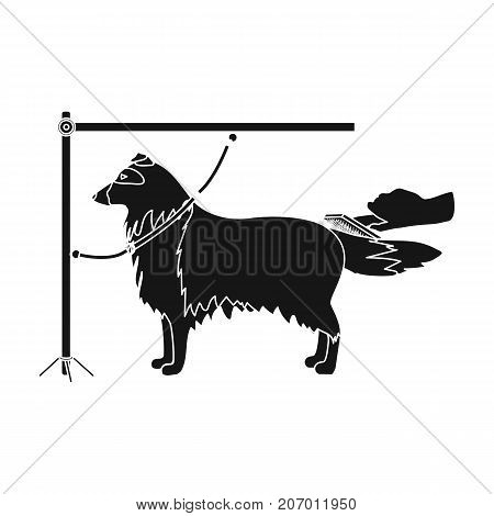 Combing a pet's fur, a dog in a stylish salon. Pet , dog care single icon in black style vector symbol stock illustration .