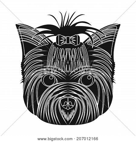 Muzzle of a pet, a hairdress dog with a bow. Pet, dog care single icon in black style vector symbol stock illustration .