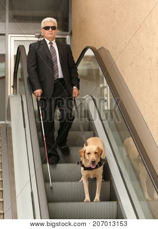 Blind man with guide dog on escalator