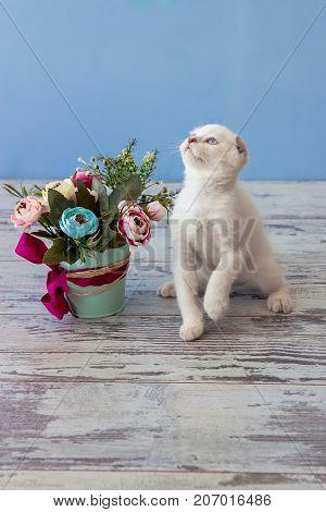 Kitten Of Scottish Fold Breed With Flower Bouquet