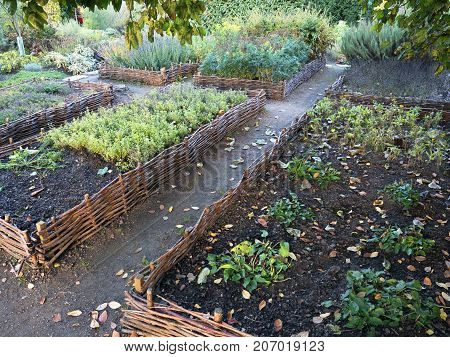 Vegetable elevated wicker beds. Gardening equipment for home gardeners. Compost soil and seed setting. Sunny day. Agriculture equipment. Different types of vegetables and herbs.