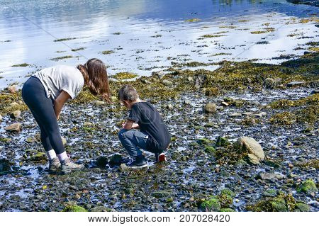 Sister And Brother Looking For Seashells On Loch Creran, Scotland