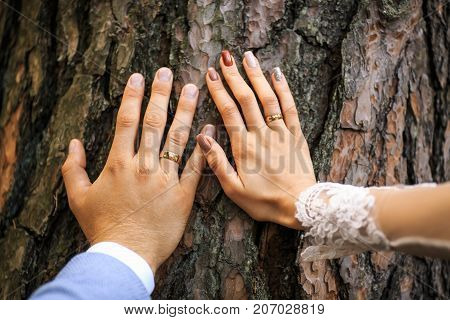 Hands With Rings Of Newlyweds Close-up Opposite Bark Tree. Wedding Day.