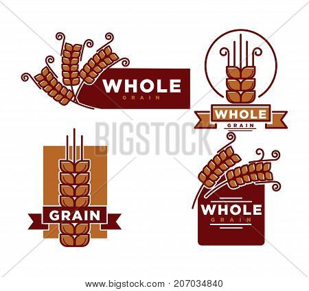 Whole grain product emblems set with ripe long spike and sign on rectangle isolated cartoon flat vector illustration in brown color on white background. Promotional label for food on cereals base.