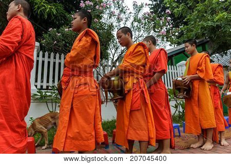 Buddhist Monks Collect Alms In Luang Prabang, Laos