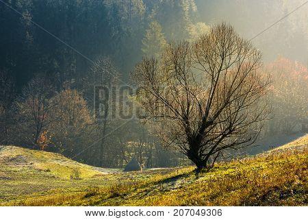 Lonely Naked Tree On Hillside