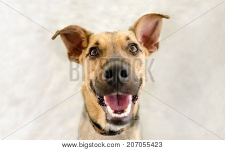 Happy dog is a very excited happy looking dog with a great big smile on his face.