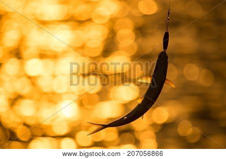 a fish on a lure at sunset .