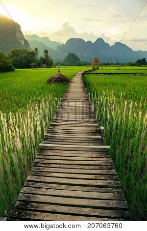 Mountain sunset and green rice fields in Vang Vieng Laos
