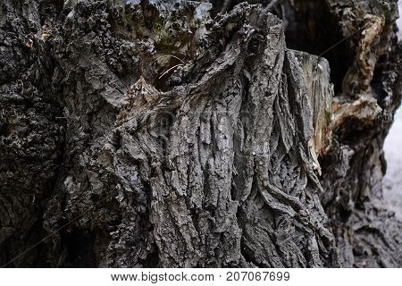 Wooden bark background. Old tree bark texture