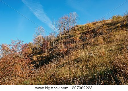 Landscape With Blue Sky And Autumn Trees And Brush Upon Grassland Hills.