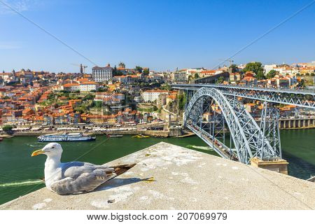 Seagull sitting enjoys Porto skyline. Freedom and travel concept. Aerial view of iconic Dom Luis I Bridge on Douro River on the horizon. Beautiful sunny day. Copy space.