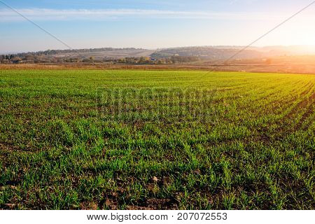View On The Farm Cornfield With Green Grass And Soil In Countryside With Autumn Hills On Background