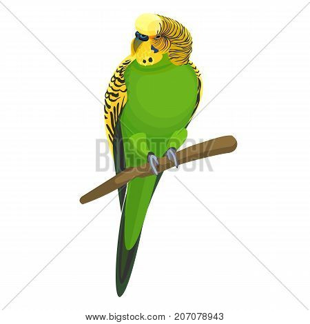 Budgerigar common or shell parakeet informally nicknamed budgie, small long-tailed seed-eating green parrot sitting on branch realistic vector illustration