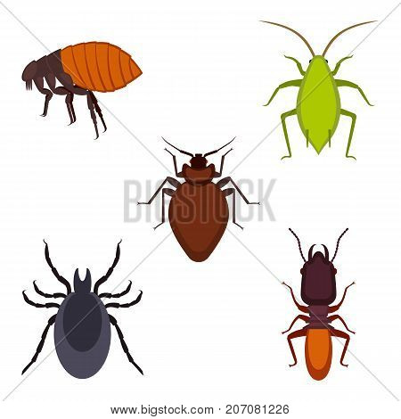 Collection of colorful bug icons including tick and aphid, termite and bed-bug, presented on vector illustration isolated on white