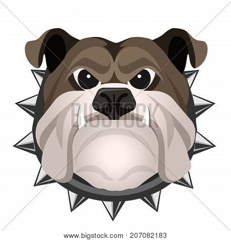 Angry bulldog face in metal collar vector realistic illustration. Head of grown up canin medium-sized breed with wrinkled face and evil tooth smile