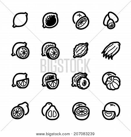 Citrus fruits icons. Citrus fruits vector illustration. Fruits and seasoning in line style. Vegetarian food signs. Professional vector icons for fruits and spices.