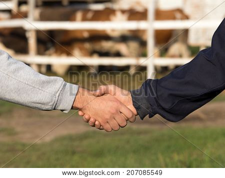 Farmers Shaking Hands In Front O Cows