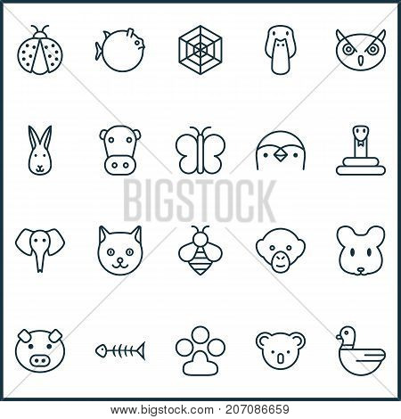 Nature Icons Set. Collection Of Bunny, Goose, Cobweb And Other Elements