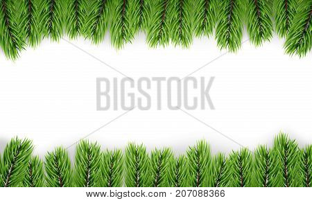 Christmas tree. Background of isoalted fir tree branches. Winter seasonal background.