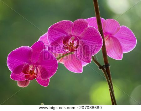 Purple orchids flowers on a blurred background.