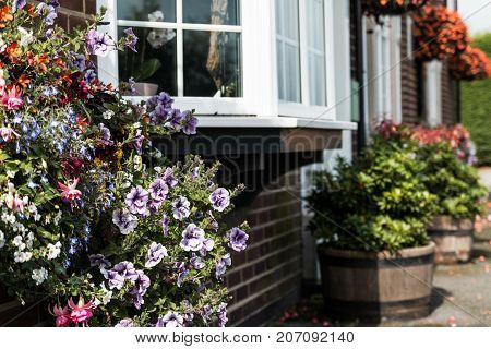 Flowers and Bay Window. Focused close on the near flowers with background allowed to have soft focus.