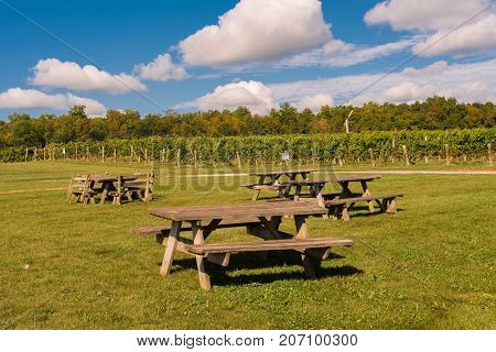 Picnic tables on the grass near rows of grapes for wine produciton growing in a vineyard in NY State