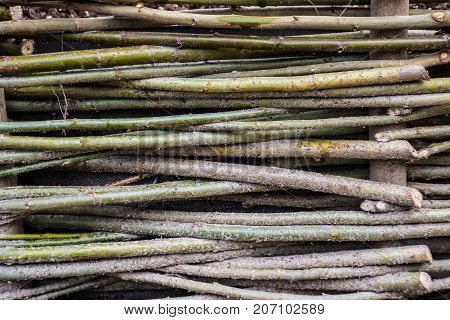 Weaving of tree branches - rustic weave of the fence. Design handmade wood. Rural crafts natural materials.