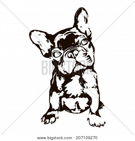 Vector black and white illustration of dog breed french bulldog isolated on white background