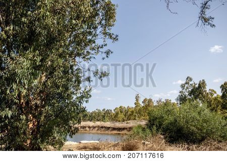 Eucalyptus grove with a river with low water level