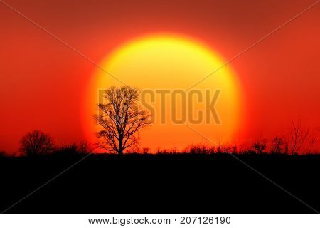 Single tree against sun rise back drop