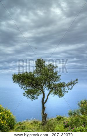 A lone tree overlooking the see in HDR.