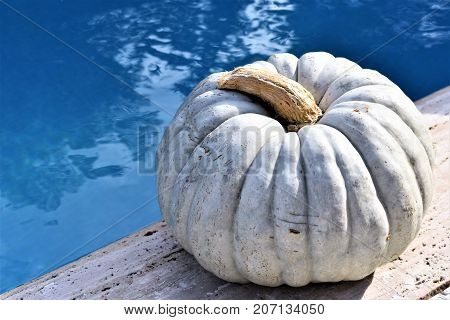 Autumn concept. Pool party. Party in the pool. Halloween. Pumpkin near the pool. Gray pumpkin and blue water.