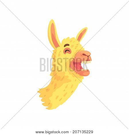 Funny laughing llama character, cute alpaca animal cartoon vector Illustration on a white background