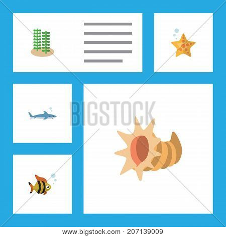 Flat Icon Sea Set Of Shark, Seashell, Seaweed And Other Vector Objects