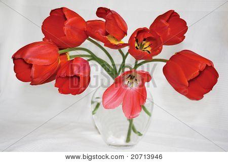 Red Tulips In Glass Vase