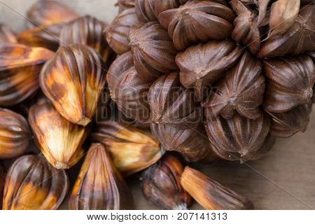 Nypa Palm Fruit In Thailand, Close Up Of Nypa Seed In Nature